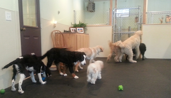 Doggy Daycare Indoors